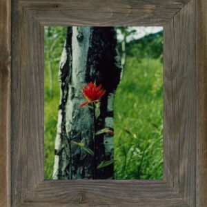 "5"" x 5"" Western Barnwood Picture Frame"