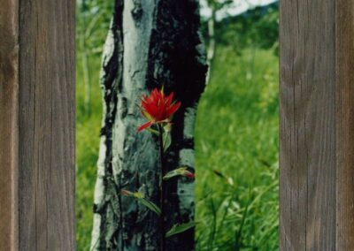 """5"""" X 7""""Western Barnwood Picture Frame"""