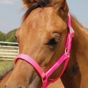 Foal Halter ( 0 t0 200 lb.)